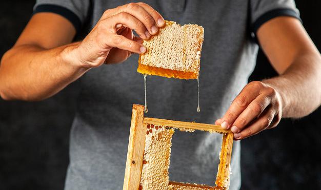 La apicultura centrará uno de los cursos.