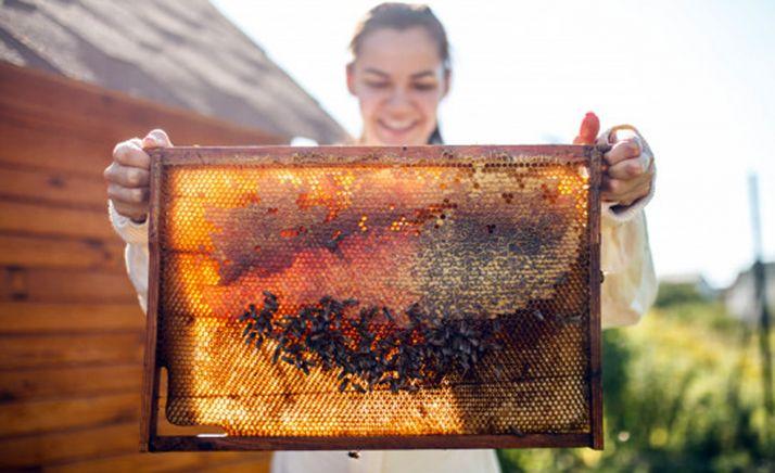 Una apicultora con una colmena.