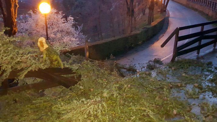 Un árbol derribado esta madrugada en la subida al castillo, en Soria capital. /Ayto.