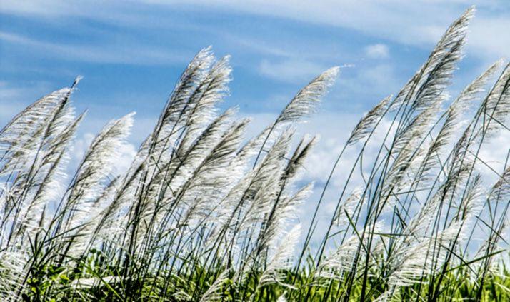 Foto 1 - El viento alcanza los 123 kilómetros por hora en El Burgo