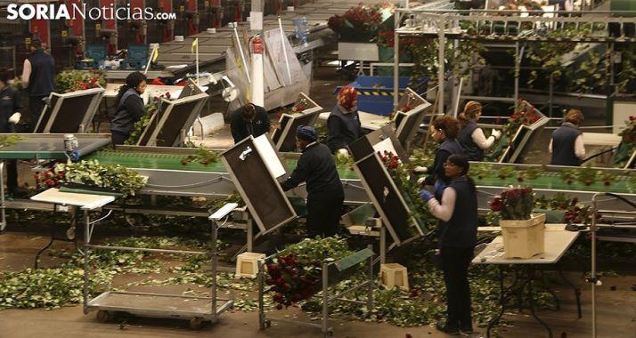 Foto 1 - CCOO insiste en la viabilidad de Aleia Roses