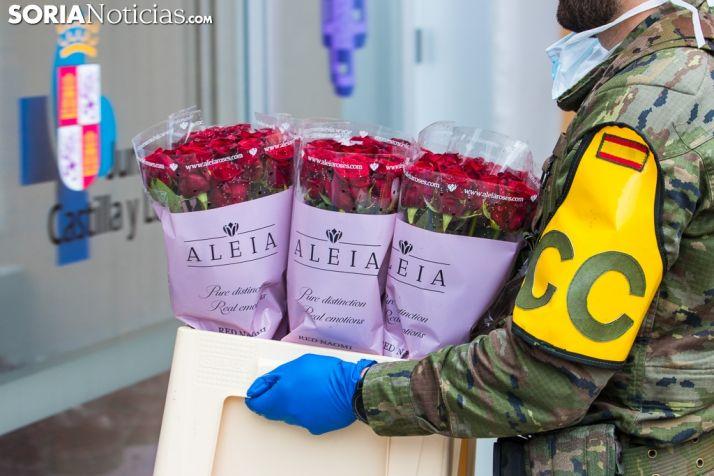 GALERÍA: La rosa más bonita del mundo como símbolo de agradecimiento en Soria
