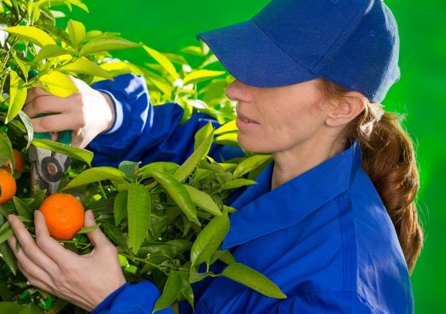 Foto 1 - El Gobierno busca facilitar la contratación de trabajadores de temporada para el sector agropecuario