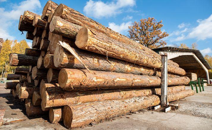 Foto 1 - La Junta licita en Soria 23 lotes de madera valorados en más de 1 M€