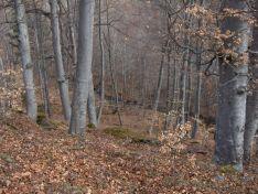 Foto 2 - Soria reducirá la vulnerabilidad de los bosques frente al cambio climático