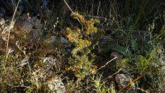 Foto 4 - Labores de desbroce en el Ecoparque de Andaluz