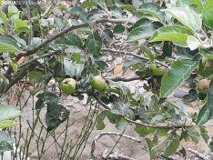 La naturaleza se ha adueñado de los pueblos sorianos.