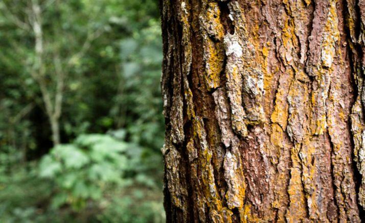 Foto 1 - La región lidera la superficie de monte con Certificado de Gestión Forestal Sostenible