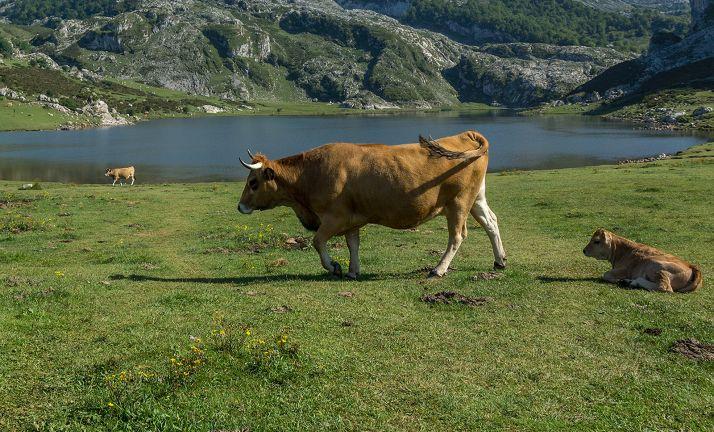 Foto 1 - Toda la provincia tiene ya sus cebaderos calificados para la tuberculosis y la brucelosis en la especie bovina