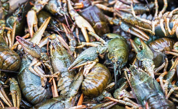 Foto 1 - Abierto el cangrejo, todo el año