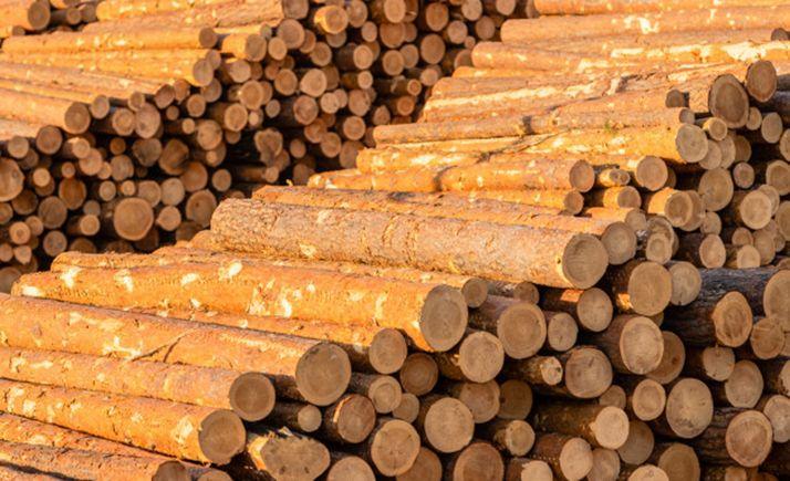 Foto 1 - Aprobados seis pliegos de aprovechamientos maderables por 975.000 €