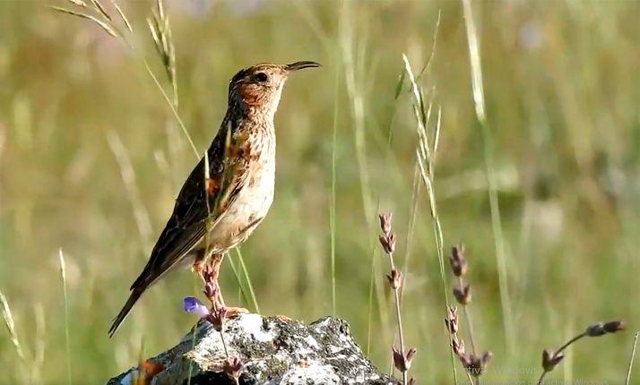 Un ejemplar de esta ave en el sur de la provincia. /Adrián Barrero Diego