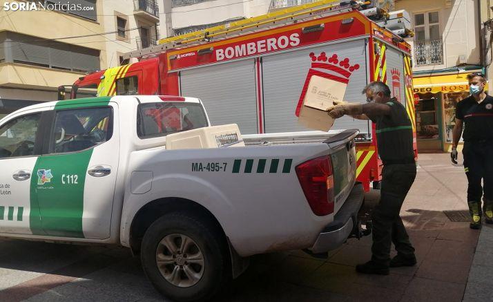Un agente de Medio Ambiente introduce en su vehículo la caja que contenía el ave. /SN
