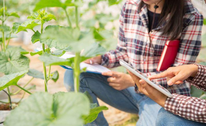 Ingenieros agrónomos durante un estudio de investigación en un cultivo.