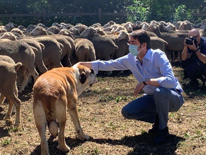 Suárez-Quiñones con un perro trashumante.