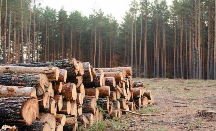 Foto 1 - Adjudicados aprovechamientos maderables por más de 111.000 €