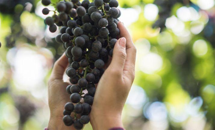 Foto 1 - Las obras para el ciclo de Vitivinicultura en San Esteban comenzarán a principios de 2021