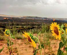 Arden más de 14 hectáreas en Aldealafuente