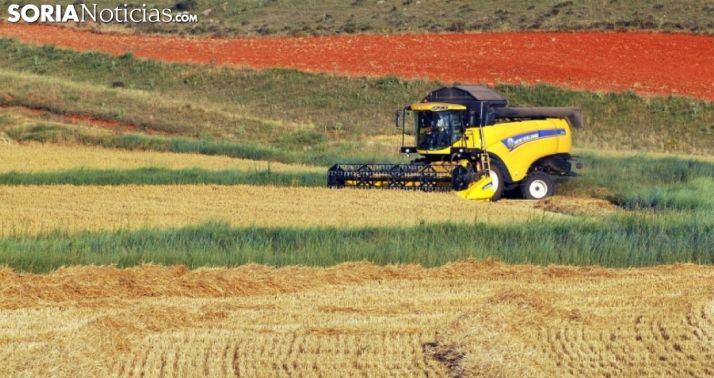 Foto 1 - La cosecha estival de 2020, en datos