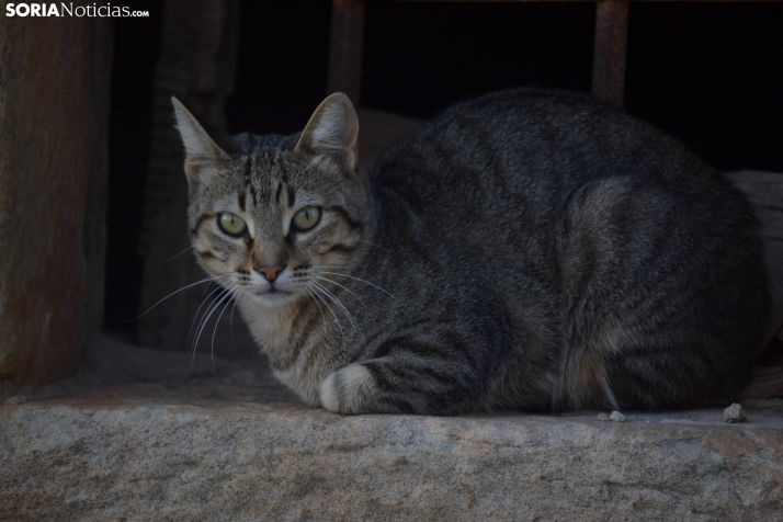 Foto 1 - Los veterinario de Castilla y León piden ampliar la cartera de servicios de la Salud Pública