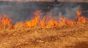 Foto 1 - El calor sahariano propicia un riesgo extremo de incendios forestales hasta el día 10: ¡Mucha precaución!