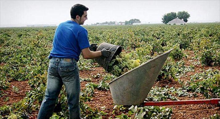 Joven agricultor trabaja la viña.