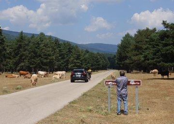 Foto 2 - Vuelta a España: Perico Delgado sube a la Laguna Negra para RTVE
