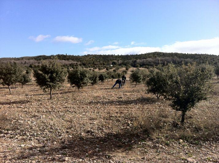 Finca trufera en la provincia de Soria.