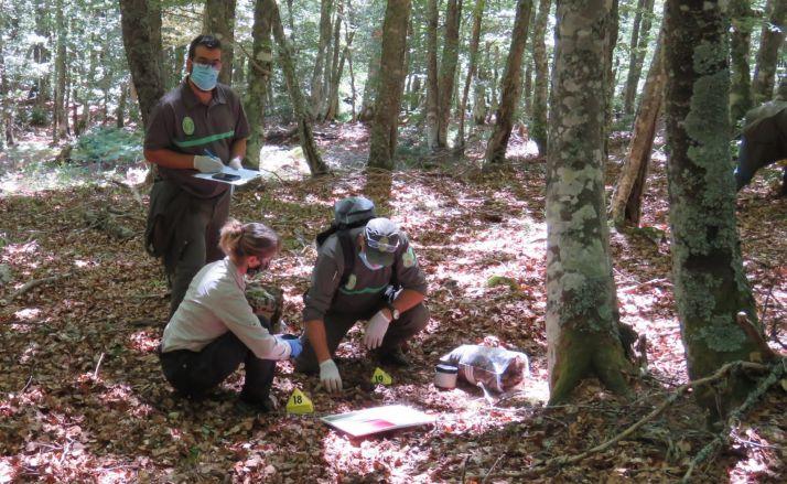 Agentes medioambientales en el lugar del hallazgo. /Jta.