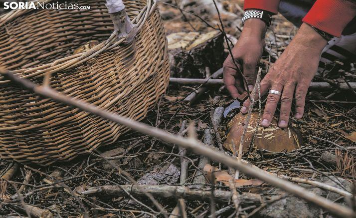 Foto 1 - Covaleda ya expide los permisos micológicos