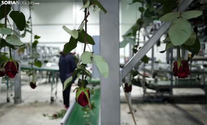 Una imagen del proceso productivo en la planta de Garray. /SN