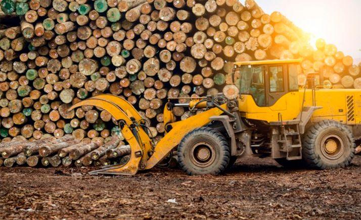 Foto 1 - El Ayuntamiento licita más de 1M€ de aprovechamientos maderables y pastos