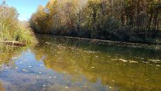 Foto 7 - Un paseo por las pasarelas del Duero en Soria, foto a foto