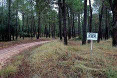 Foto 5 - Almazán, referencia para los recolectores micológicos