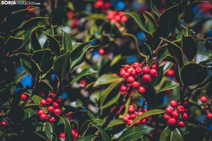 Acebal de Garagüeta: una visita navideña indispensable