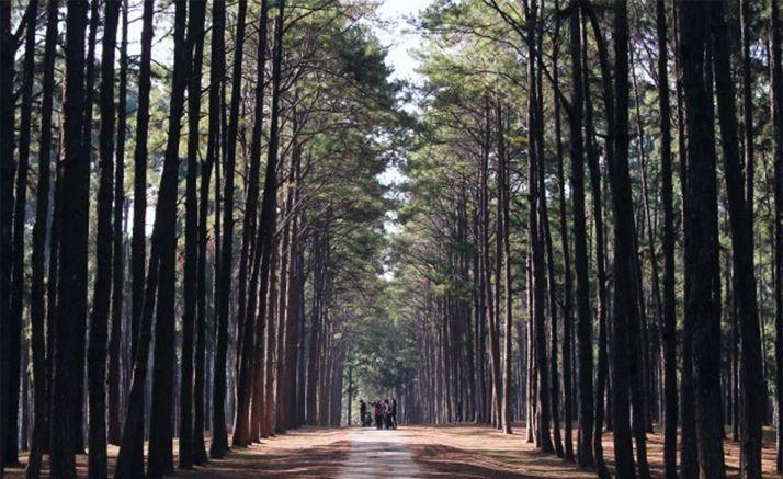 Foto 1 - El Cesefor participará en a organización del I Congreso de Propiedad Forestal de España