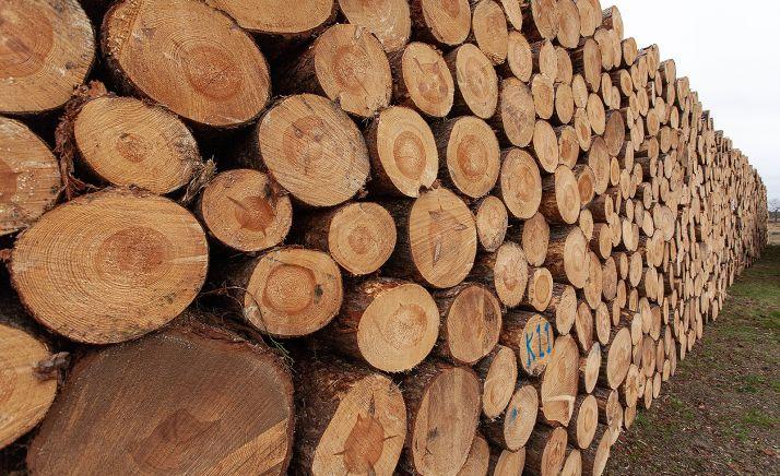 Foto 1 - La región tiene como objetivo alcanzar en 2025 una producción de 4 millones de metros cúbicos de madera, un 30 % más que en la actualidad