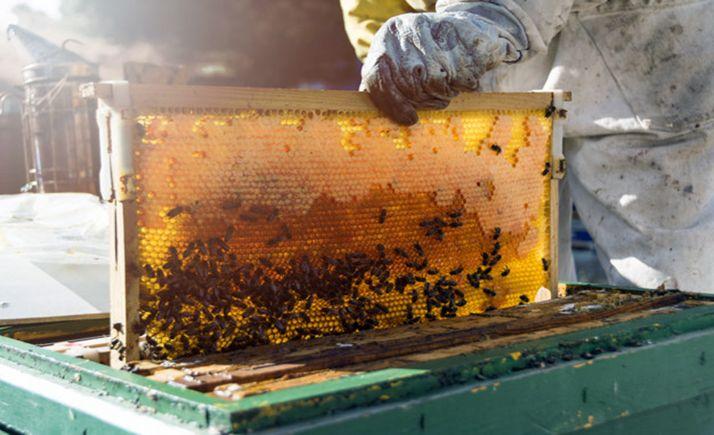 Foto 1 - 1,6 M€ para la mejora de la producción y comercialización de la miel de CyL