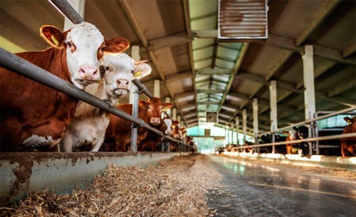 Foto 1 -  COAG Soria no apoyará la cuota que quiere imponer la Interprofesional de la carne de vacuno