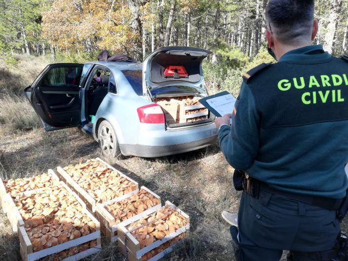 Setas en Soria: ¿Cuál es el destino de los miles de kilos decomisados en la provincia?