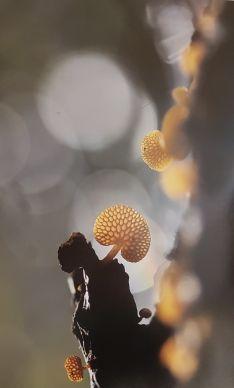 Foto 4 - Setas de Soria: 'La Luz' de Alex Alonso, de Barcelona, gana el XXIV Concurso de Fotografía Micológica en Navaleno