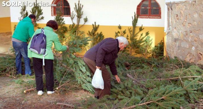 Foto 1 - El Ayuntamiento repartirá a partir de mañana pinos de Navidad 'reciclables'