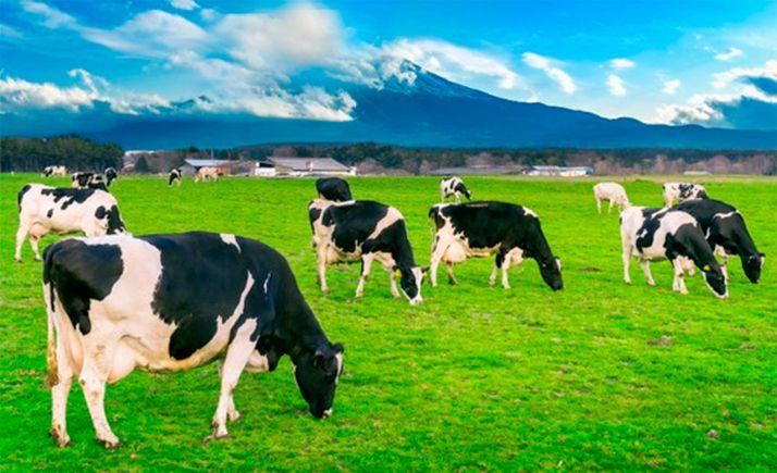 Foto 1 - Recogida de firmas contra la vaquería de Noviercas