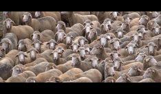 Una imagen del documental 'La loba parda', de la soriana Cristina Ortega.