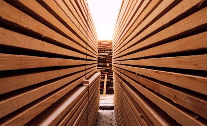 Foto 1 - Los aprovechamientos maderables de Ayuntamiento y Mancomunidad supusieron 1,6 M€ en 2020