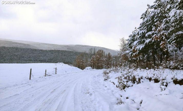 Una imagen de la nieve caída estos días en la zona de Pinares. /SN