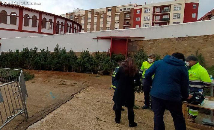 Reparto de los pinos en la plaza de toros en diciembre. /SN