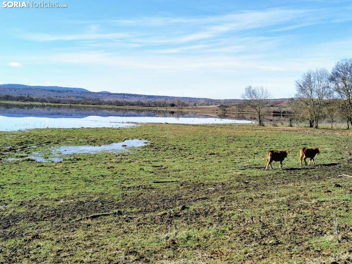 Foto 2 - La Laguna de Hinojosa de la Sierra reaparece con la nieve y las lluvias