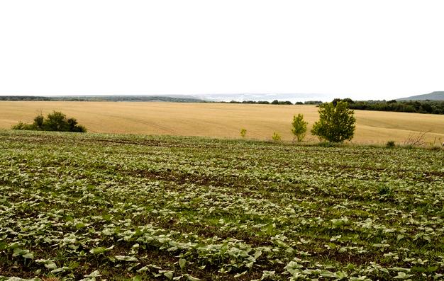 Foto 1 - La Junta presenta un modelo alternativo para la aplicación de prácticas agroambientales de la nueva PAC