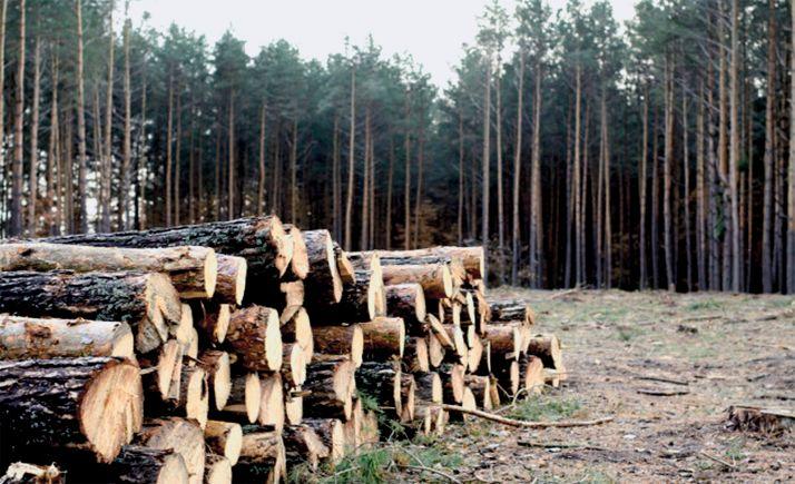 Foto 1 - El 31 termina el plazo para que maderistas e importadores de madera presenten la declaración responsable anual